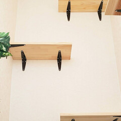 DIY/キャットトンネル/キャットウォーク/猫のいる暮らし/ねこ/ネコ/... 壁をぶっ壊してキャットトンネルとキャット…(8枚目)