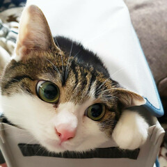 猫好き/猫バカ/猫と住む家/猫との暮らし/猫のいる暮らし/猫と暮らす/... 猫って何で狭い場所が好きなんでしょうねぇ…