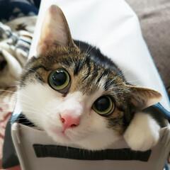 猫好き/猫バカ/猫と住む家/猫との暮らし/猫のいる暮らし/猫と暮らす/... 猫って何で狭い場所が好きなんでしょうねぇ…(3枚目)