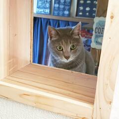 DIY/キャットトンネル/キャットウォーク/猫のいる暮らし/ねこ/ネコ/... 壁をぶっ壊してキャットトンネルとキャット…(3枚目)