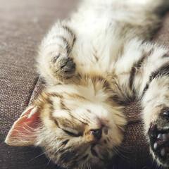 保護ネコ/保護ねこ/保護猫/猫と暮らす家/猫との生活/ねことの暮らし/... 初めてのへそ天(///ω///)♪  こ…