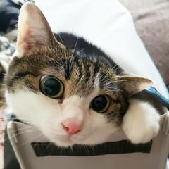 猫好き/猫バカ/猫と住む家/猫との暮らし/猫のいる暮らし/猫と暮らす/... 猫って何で狭い場所が好きなんでしょうねぇ…(2枚目)
