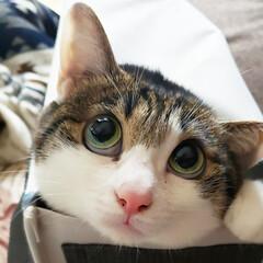 猫好き/猫バカ/猫と住む家/猫との暮らし/猫のいる暮らし/猫と暮らす/... 猫って何で狭い場所が好きなんでしょうねぇ…(4枚目)