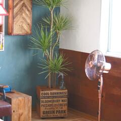 観葉植物/ボタニカル/DIY/100均/インテリア 鉢植え コンパネに100均のかみぶくろを…