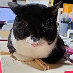 病気持ち/オス猫/飼い猫/猫好きさんと繋がりたい/ねこ部/猫好き仲間募集/... 僕はお姉ちゃんの汚いテーブルが写らないよ…