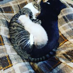 ネコとの暮らし/猫と暮らす/ペットと暮らす/ねこ/ペット 仲良しこよし(1枚目)