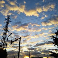 街路樹の紅葉/早朝の散歩 こんばんは😃🌃 久しぶりの朝散歩に出かけ…