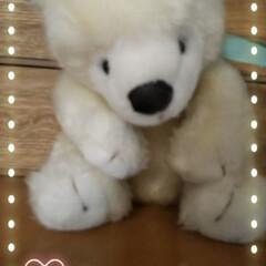ぬいぐるみ/テディベアミュージアム伊豆高原/LIMIAファンクラブ 15年程たちますが一目惚れで買った白熊の…
