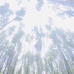 思い出/新婚旅行/フォロー大歓迎/冬/おでかけ/旅行/... 2018年2月 新婚旅行^_^ 京都嵐山…