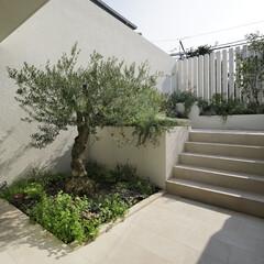 テラス リビングに寄り添う庭には樹齢100年を越…