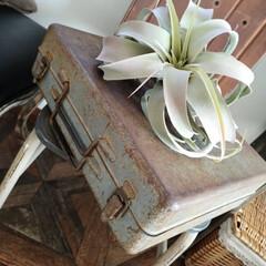 男前インテリア/錆び好き/錆び/戦利品/雑貨/収納 錆び好きで 錆び錆びなトランクケースをゲ…