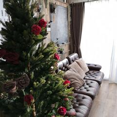 カフェ風インテリア/リビング/バラツリー/ローズツリー/クリスマスツリー/ダイソー/... 我が家のクリスマスツリー。 子どもたちも…(2枚目)