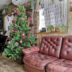 リビングDIY/リビング/カリモク/カリモクソファー/クッションフロア/クリスマスツリー/... クリスマスツリーを飾りました。 今年は隅…