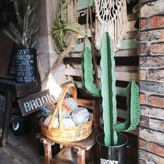 壁紙屋本舗/男前インテリア/玄関インテリア/玄関/アイアン/サボテン/... カインズで見つけた アイアンオブジェ の…