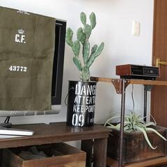 パーケット柄/壁紙屋本舗/寝室/フェイクグリーン/サボテン/いなざうるす屋さん/... いなざうるす屋さんの うさぎサボテン。 …(2枚目)