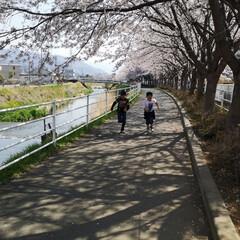 花見より筋トレ/ジョギング/小学生/桜並木/春のフォト投稿キャンペーン/おでかけワンショット 毎年、桜を見に来る場所 車では来られない…