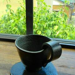 陶芸作品/陶芸/陶器/ハンドメイド 今日は久々陶芸でした❤️ 焼き上がりもあ…