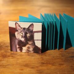 蛇腹本/アルバム/写真/猫 蛇腹式の小さなアルバムです。 日記を書く…
