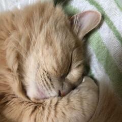 おやすみショット 気持ち良さそうでしょ。
