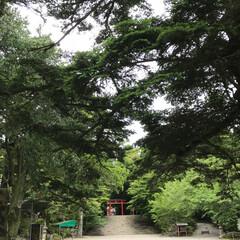 グリーン 鹿児島の霧島神宮です(^^) すごいパワ…