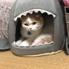 フォロー大歓迎/ペット/ペット仲間募集/猫/にゃんこ同好会 いないと思ったらサメに食べられてた😻(2枚目)
