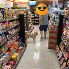台湾/旅行/フォロー大歓迎/ペット/ペット仲間募集/犬/... 【思い出】夏に一人で行った台湾旅行で出会…