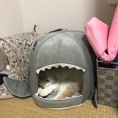 フォロー大歓迎/ペット/ペット仲間募集/猫/にゃんこ同好会 いないと思ったらサメに食べられてた😻(1枚目)