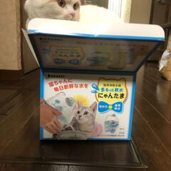 クリタック ロカペット 猫用浄軟水器 まるっと軟水 にゃんたま(その他ペット用品、生き物)を使ったクチコミ「我が家のはるくんにクリスマスプレゼントを…」