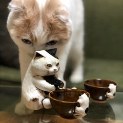 徳利/とっくり/おちょこ/お猪口/日本酒/フォロー大歓迎/... はるくんと白亜器さんの猫徳利と猫お猪口🐱…(1枚目)