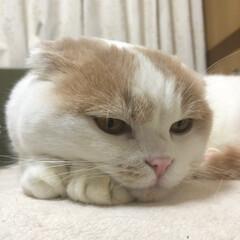 フォロー大歓迎/ペット/ペット仲間募集/猫/にゃんこ同好会 ちょこん('ω')