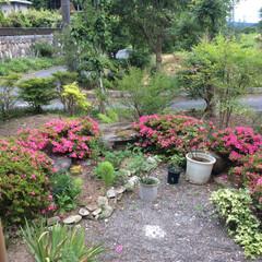 梅雨 梅雨に入りましたが、我が家の庭は花いっぱ…