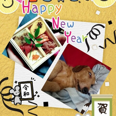 明けましておめでとうございます/わんちゃん御節/お正月2020 明けましておめでとうございます(^^) …