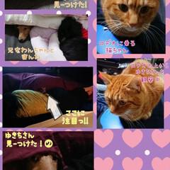 動物事情/猫パンチ/怖い/猫ちゃんVSゆきちさん/いつまでも/仲良くなれない/... 皆が大好きすぎるゆきちさん 特に猫ちゃん…