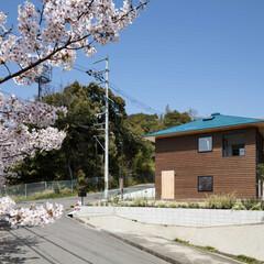 新築/木造/住宅/戸建て/一戸建て/大阪/... 南東から見る。道路を挟んで桜並木と雑木林…