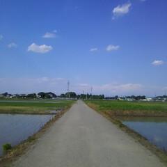 田んぼ/青田風/空気 ~空気がうまい!~  すうぅぅぅぅ~~~…