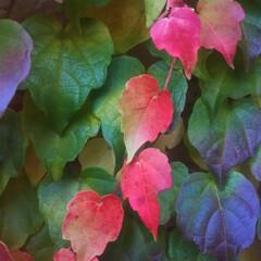 コンロ専用パネル/旅/小旅行/なっかん/対面キッチン/アイランド型キッチン/... ~深まる秋。~   古びたアパートの外壁…