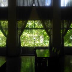 コンロ専用パネル/なっかん/プラスワンダー/油跳ね防止パネル/キッチンパネル/アイカ工業/... ~緑のカーテン。②~(地下ホールから花壇…