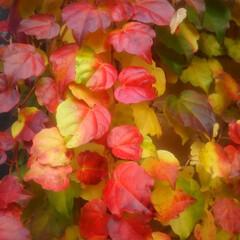 コンロ専用パネル/小旅行/旅/なっかん/油跳ね防止パネル/対面キッチン/... ~更に深まる秋。~   先週、勤労感謝の…