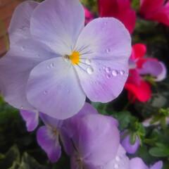 コンロ専用パネル/なっかん/春の一枚/プラスワンダー/アイカ工業/油跳ね防止パネル ~花。~  花に特段の興味はない。 だか…(1枚目)