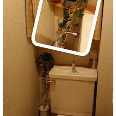 トイレに観葉植物 観葉植物購入してきましたー🎶色々考えて、…