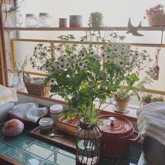見て下さりありがとうございます♡/いいねありがとうございます♡/お花のある暮らし/マトリカリア/ライフスタイル/暮らし/... マトリカリアというお花を先週お花屋さんで…(2枚目)