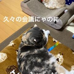 動物大好き/猫大好き/親バカ/会話/こむぎ課長/せんぶちょ おはようございますヽ(^0^)ノ  今朝…(3枚目)