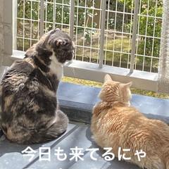 お友達/黒猫ちゃん/ベランダ/日焼け/こむぎ/せん/... お天気☀️.°良くなり せんぶっちょのマ…(5枚目)