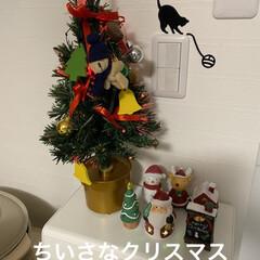 せんぶちょ/スコティッシュフォールド/飾り/クリスマスツリー/クリスマス こんばんは🌙*.。★*゚ 何かXmas作…(1枚目)