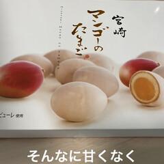 🥚温めても生まれません(笑)/宮崎マンゴーのたまご/こむぎ/せんぶちょ おはようございます( ´ ▽ ` )  …