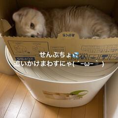 箱に引きこもり/動物大好き/猫大好き/こむぎ課長/せんぶちょ おはようございます♡  今日もせんぶちょ…(3枚目)