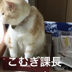 スコティッシュフォールド/飼って頂ける方が/迷い猫/ファッション/フォロー大歓迎 こんばんは(﹡ˆ﹀ˆ﹡)♡ 迷い猫ちゃん…
