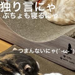 動物大好き/猫大好き/親バカ/会話/こむぎ課長/せんぶちょ おはようございますヽ(^0^)ノ  今朝…(4枚目)
