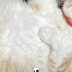 動物大好き/猫大好き/最終調整/こむぎ課長/👻ダンス/☠🎃HappyHalloween🍭🍬 おはようございます🎃🦇🕸  こむぎ課長(…(4枚目)
