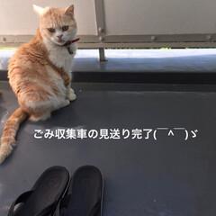 見送り/課長/部長🐽/猫/フォロー大歓迎/LIMIAペット同好会/... おはようございます=(^.^)= 今朝の…